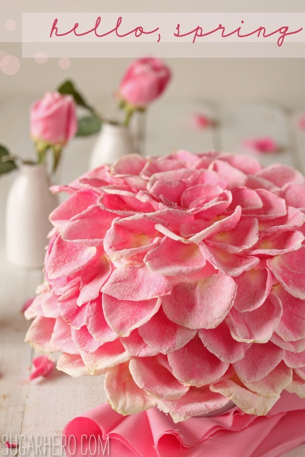 raspberry rose cakes vanilla raspberry cake cakes and pastries recipes ...
